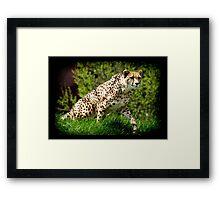 Cheetah Wild Cat Animal-Lover Wildlife Poster Framed Print