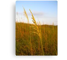 Dune Grass Canvas Print