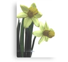 Simply Daffodils Canvas Print