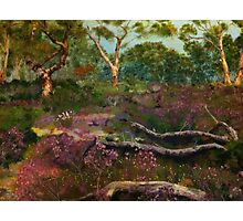 Sterling Ranges Wildflowers Photographic Print
