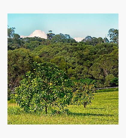 Fruit tree on a rural property Photographic Print