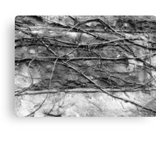 vinter vines (black&white) Canvas Print