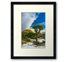Joshua Tree in Snow Framed Print