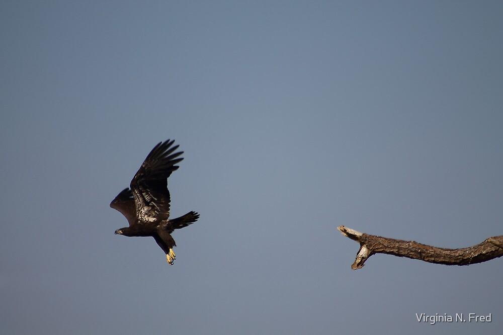 Honor in Flight by Virginia N. Fred
