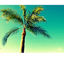South Florida Tree - Abstract Nature Photography Photographic Print