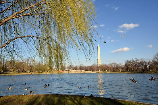 Spring in the District of Columbia by Matsumoto