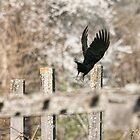 As the Crow Flies by Tracy Riddell