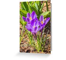Lavender sunshine Greeting Card