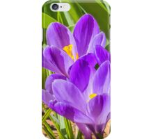 Lavender sunshine iPhone Case/Skin