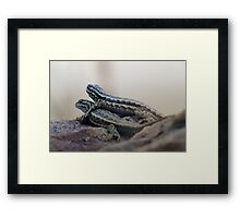 Lizards In Love Framed Print