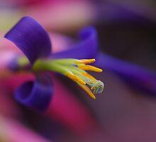 Bromeliad Flower by Liz Worth