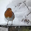 Robin in the Snow by LydiaBlonde