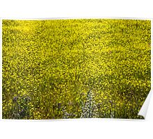 Field of Yellow Poster