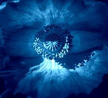 Poppy Blues by Lozzar Flowers & Art