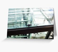 Pigeon In Town - 27 03 13 - Two - Wide Shot Greeting Card