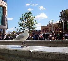 Vaguely None Of My Business - The Seagull And A Fire Drill by Robert Phillips