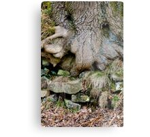 Treebeard, Goyt Valley Metal Print