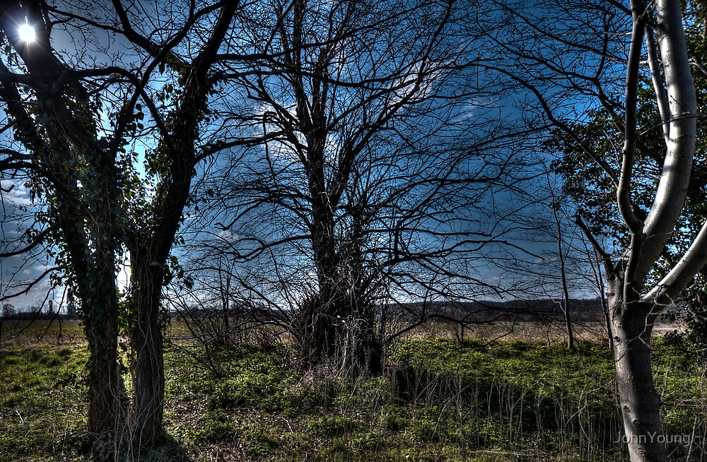 The Way From The Wild Woods by JohnYoung