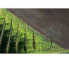 vineyards in earth of romagna Photographic Print