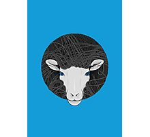 Funky Sheep Photographic Print