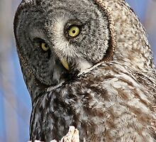 All the wisdom is in her eyes by Heather King