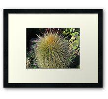Prickly Cactus Close up Framed Print