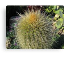 Prickly Cactus Close up Canvas Print