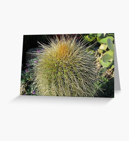 Prickly Cactus Close up Greeting Card