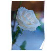 White Rose 2 Poster