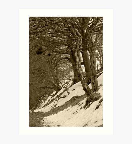 Bad Trees, Goyt Valley Art Print