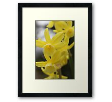 Yellow Flowers in Van Dusen Garden, Vancouver Framed Print