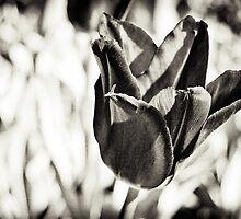 Tulip by Michael Vesia