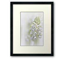 White Grape Hyacinth II Framed Print