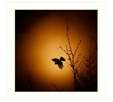 sparrow (001)  Art Print