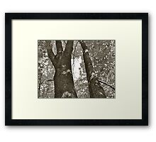 Tree two Framed Print