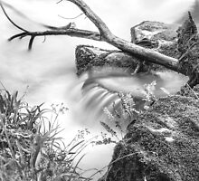 A Journey down the Riverbank by Smart Imaging by SmartImaging