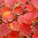 Red Leaves Of fall by WildestArt