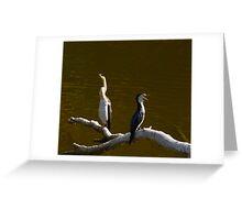 Australien Dart Birds Greeting Card