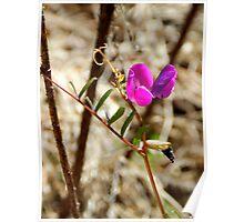 primitive orchid Poster