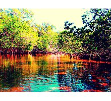 Mangrove Dream - Sanibel Island Landscape Pop Art Photographic Print