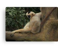 Gibbon Monkey Canvas Print
