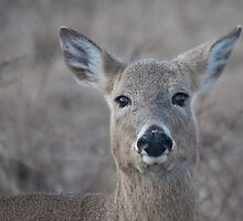 I see you!! by NVSphoto