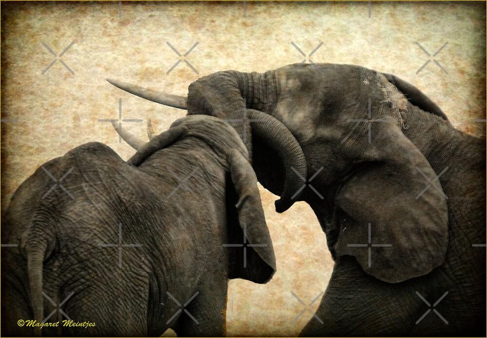 ELEPHANT INTERACTION - THE ELEPHANT - Loxodonta africana - Afrika Olifant by Magriet Meintjes