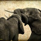 ELEPHANT INTERACTION - THE ELEPHANT - Loxodonta africana - Afrika Olifant by Magaret Meintjes