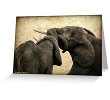 ELEPHANT INTERACTION - THE ELEPHANT - Loxodonta africana - Afrika Olifant Greeting Card