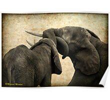 ELEPHANT INTERACTION - THE ELEPHANT - Loxodonta africana - Afrika Olifant Poster