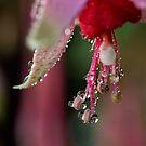 Fuchsia droplets by Celeste Mookherjee