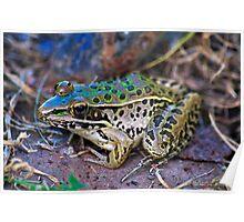 Backyard Frog (2) Poster