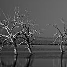Trees In Salton Sea by photosbyflood