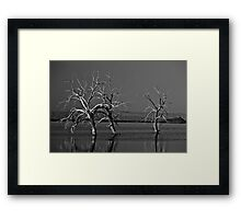 Trees In Salton Sea Framed Print